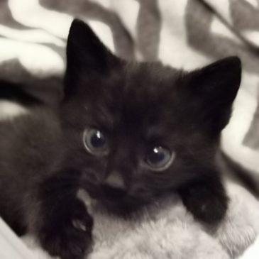 Życzliwa zbiórka na inkubator dla kotków